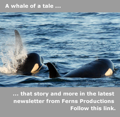 Whale Newsletter Promo